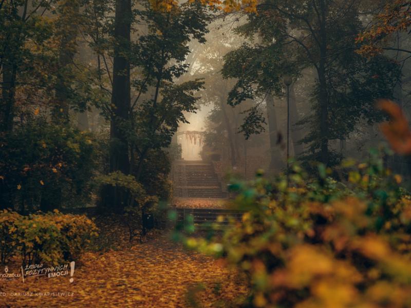 park jesienia mgła