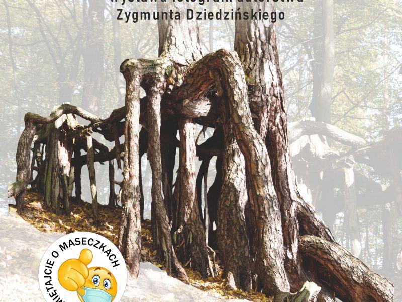 Plakat przedstawia drzewo rosnące w lesie, z korzeniami wystającymi ponad poziom gruntu. Na plakacie informacja o wystawie, miejscu i dacie