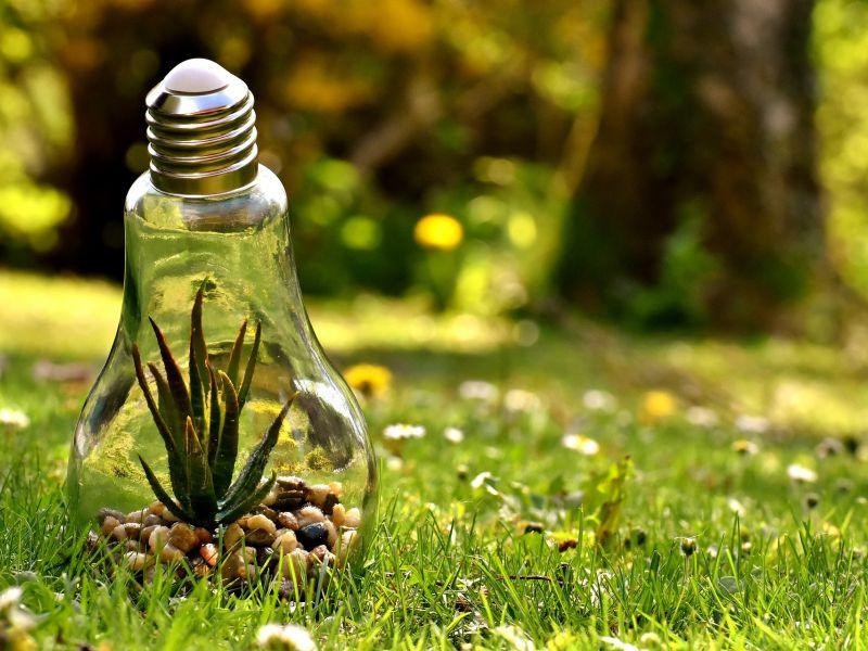 Na zdjęciu pokazano trawnik, na którym w olbrzymiej żarówce założono skalnik